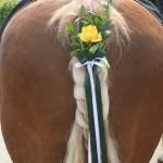 Pferdeschmuck