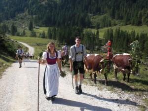 Sennerin Karin führt ihre Herde von der Schwarzbachalm auf die Alpenstraße