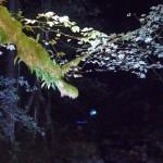 Beleuchtung Zauberwald Ramsau