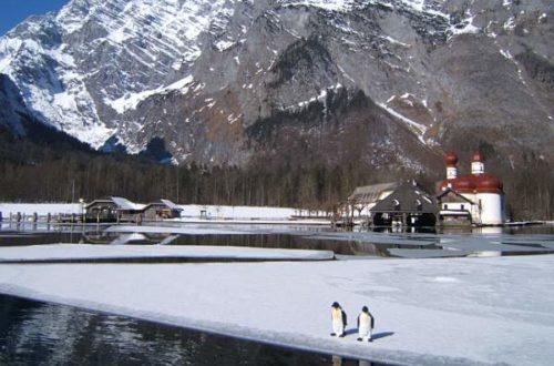 Pinguine vor St. Bartholomä am Königssee