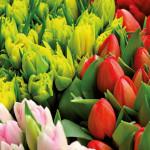 Blumen am Standlmarkt
