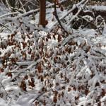 Geäst im Schnee