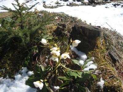 """""""Schneekader"""" in Hülle und Fülle auf der Stubenalm"""