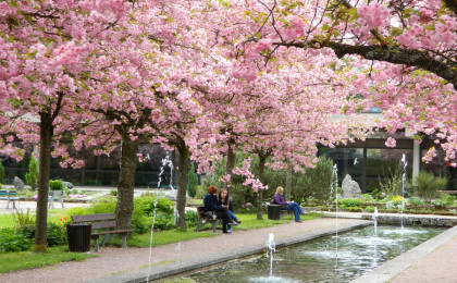 Blütenmeer im Kurgarten Berchtesgaden