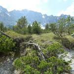 Latschenfelder im Wimbachgries