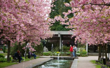 Mittagspause zur Kirschblüte in Berchtesgaden
