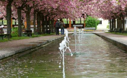 Wasserspiele im Kurgarten zur Kirschblüte