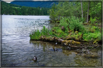 Eine Ente taucht am Hintersee