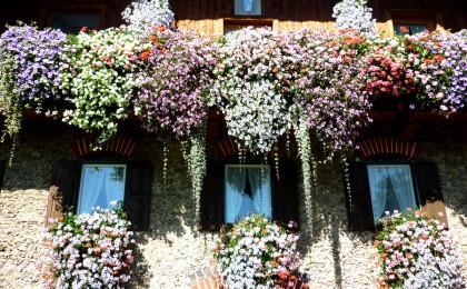 Balkonblumen bei Familie Helminger, Teisendorf