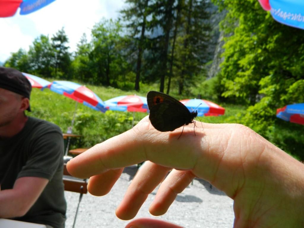 Schmetterling am Wimbachschloss