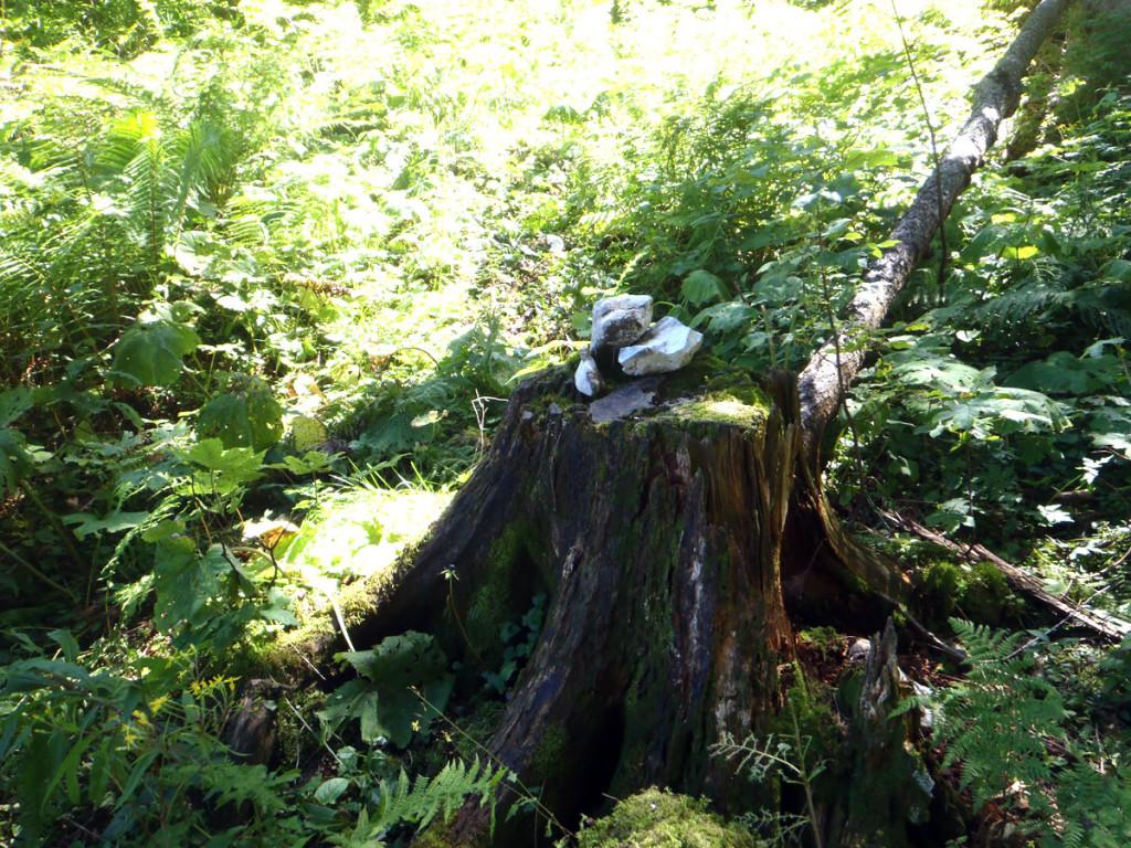 Steindaube auf Baumstumpf