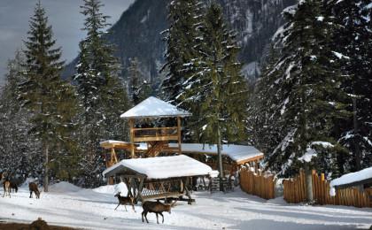 Wildfütterung im Nationalpark Berchtesgaden