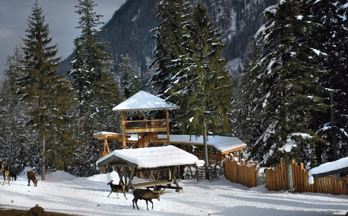 Nationalpark Berchtesgaden Und Predigtstuhl In Sendung Landgasthauser