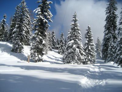 Skitour auf die Falzalm am Watzmann