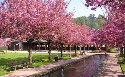 Kurgarten Berchtesgaden zur Kirschblüte