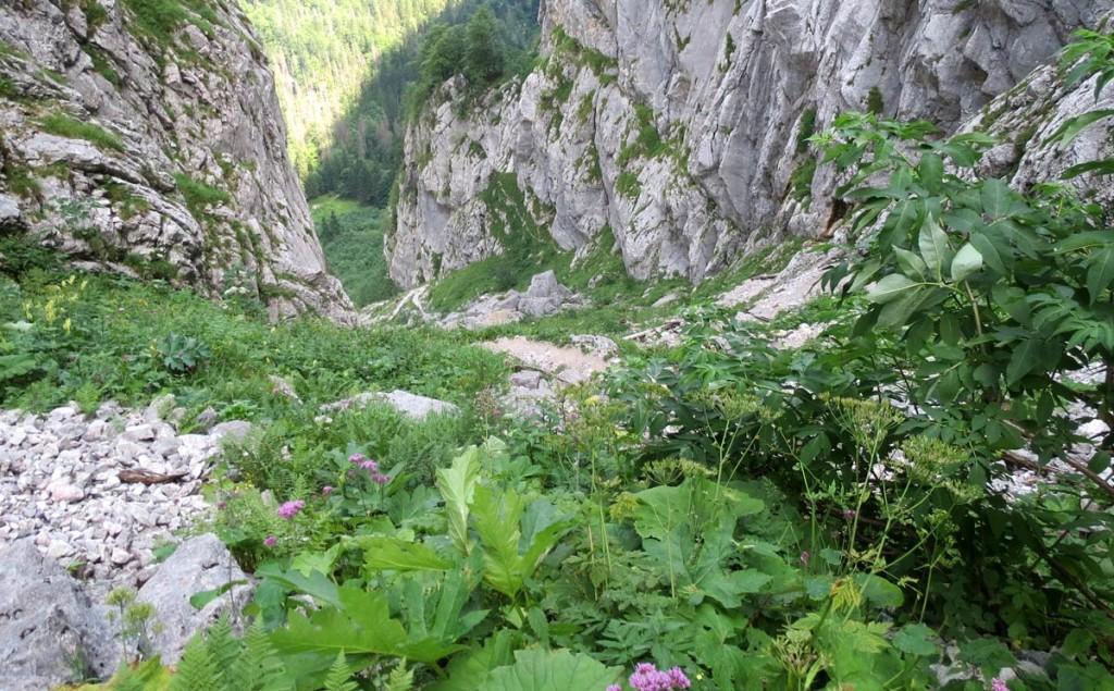 Suagasse zwischen Königssee und Funtensee