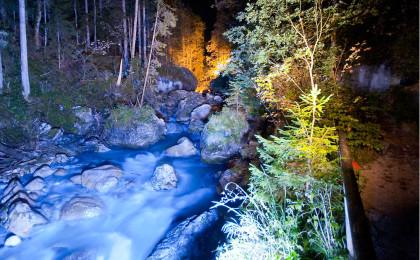 Zauberwald-Beleuchtung