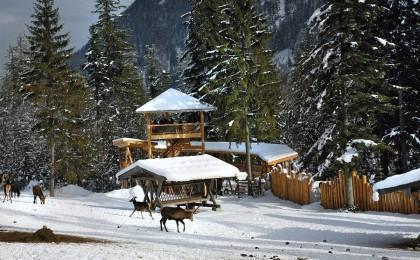 Winter an der Wildfütterung im Klausbachtal