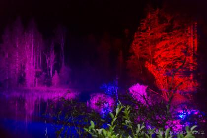 Der beleuchtete Zauberwald