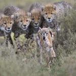 © GDT Europäischer Naturfotograf des Jahres / Gregoire Bouguereau