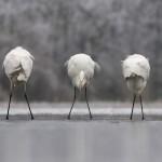 © GDT Europäischer Naturfotograf des Jahres /Jerome Guillaumot