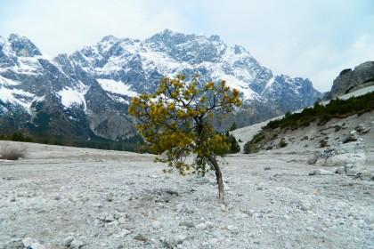 Ein Baum wächst aus Sand
