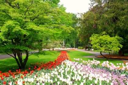 Tulpenblüte im Königlichen Kurgarten