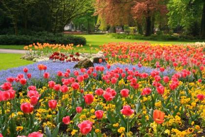 Tulpenblüte im Königlichen Kurgarten Bad Reichenhall