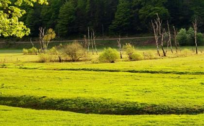 Das Hallthurmer Moos in Bischofswiesen