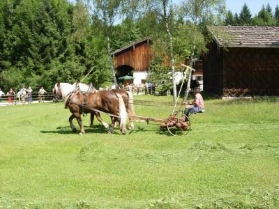 Gras mähen mit dem Arbeitspferd