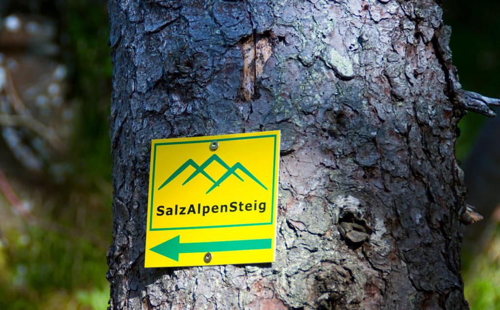 SalzAlpenSteig Beschilderung am Weg zum Grünstein