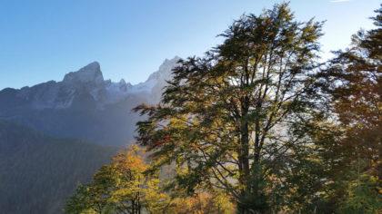 Herbst am  Grünstein mit Blick zum Watzmann