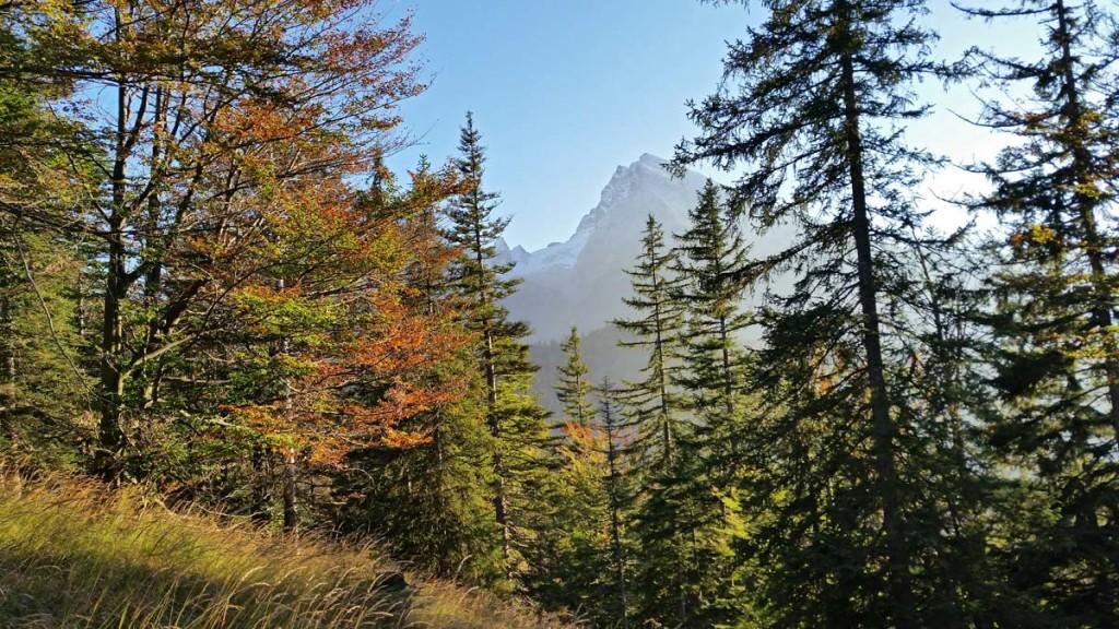 Blick durch den Herbstwald zum Watzmann