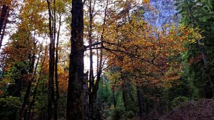 herbstlicher Wald im Wimbachtal