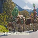 das Vieh auf dem Weg zum Heimathof Obersulzberglehen