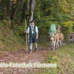 der Senner Markus Nitzinger geht dem Vieh auf dem Weg zum Heimathof voraus