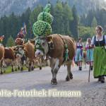 die Treiber (re. Barbara Nitzinger – die Schwester des Senners) mit dem Vieh
