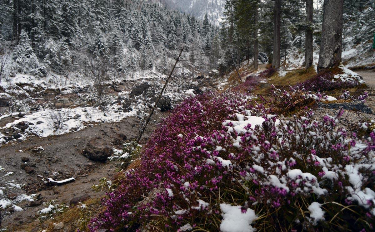 Blumen Am Wegrand Berchtesgadener Land Blog