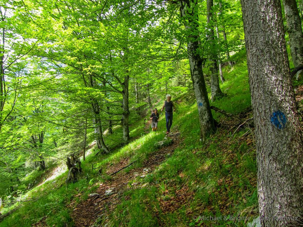 Lauf durch lichten Buchenwald