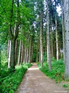 Der Weg hinein ins Ainringer Moor