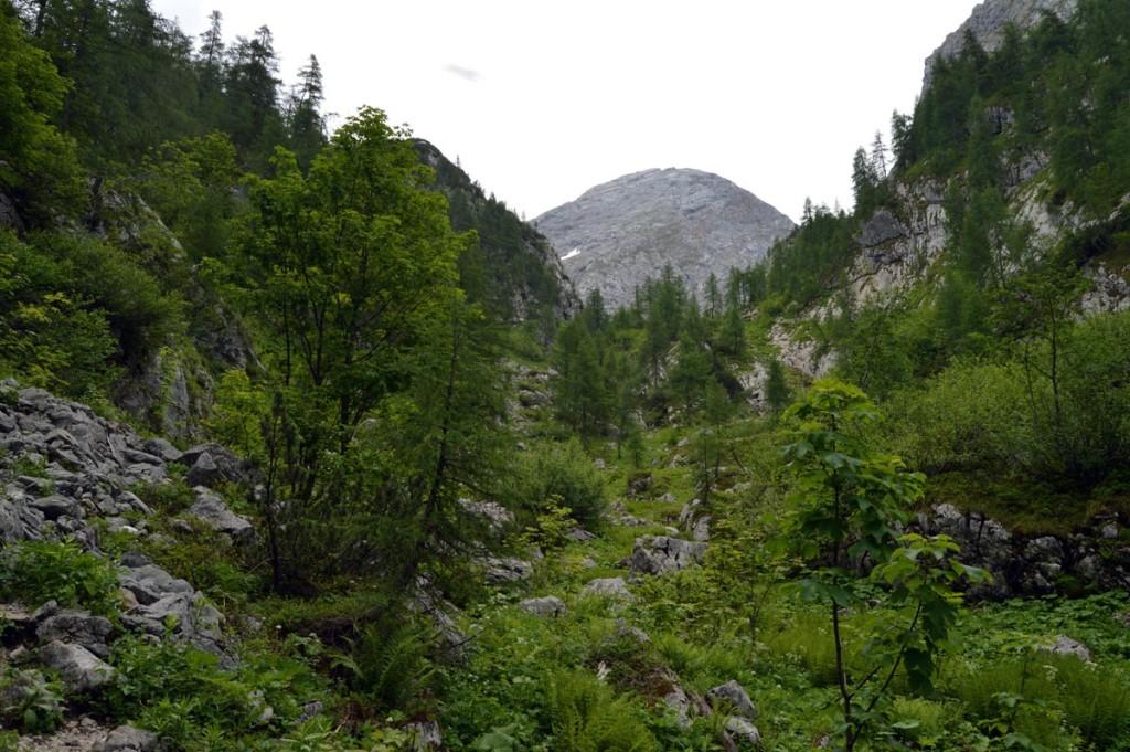 Stiergraben in Richtung Kahlersberg