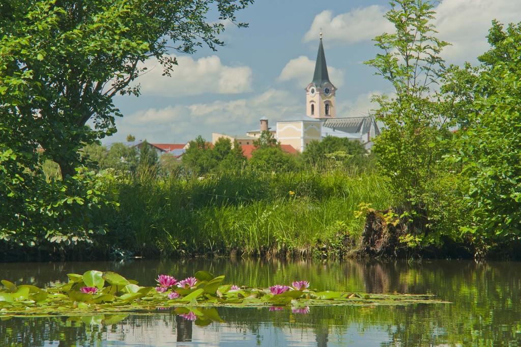 Seerosenteich vor Teisendorf, Berchtesgadener Land, Bayern, Deutschland, Europa
