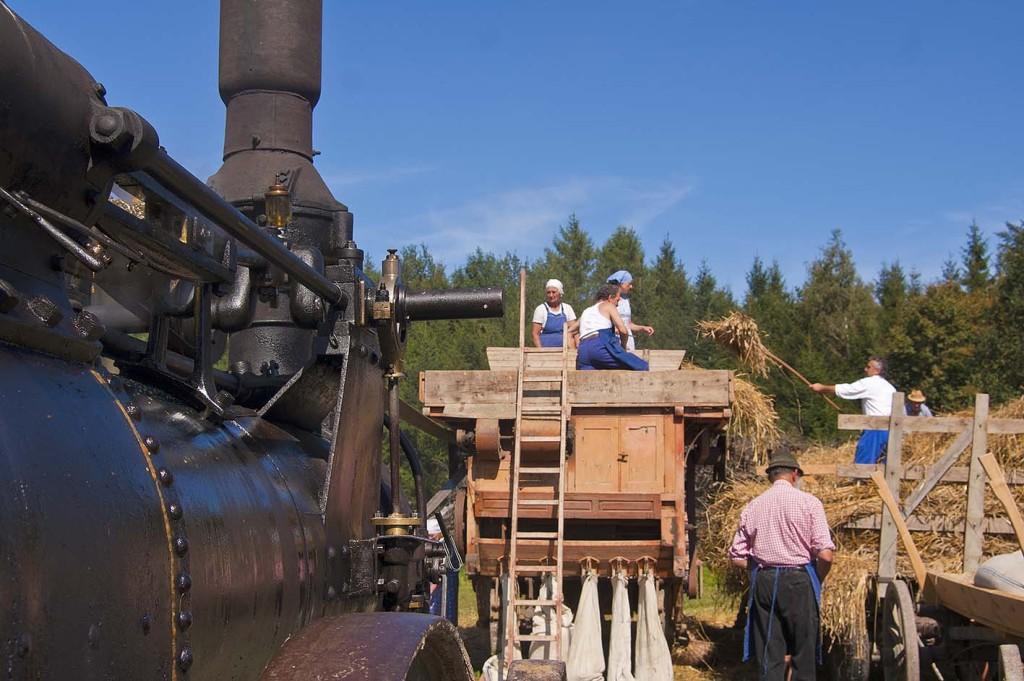 die Dampfmaschine zum Dreschen des Getreides, das Getreide wird vom Wagen auf den Dreschwagen geworfen und dort vom den Arbeitern auf in die Dreschmaschine eingelegt