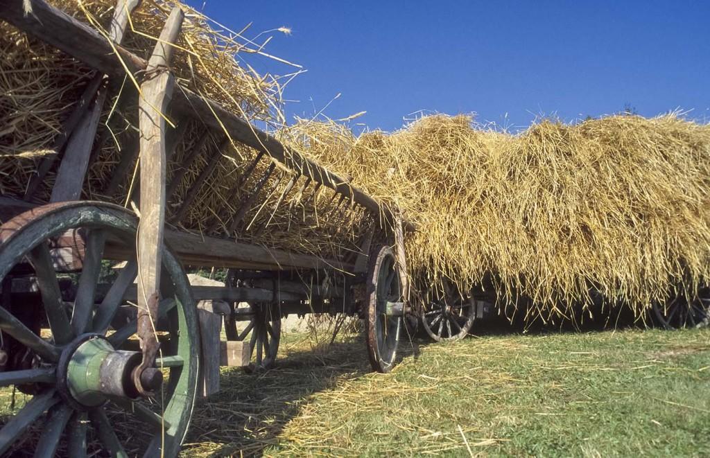 im Bauernhofmuseum Hof betreibt die Dampfmaschine den Dreschwagen zum traditionellen Dampfdreschen, das gedroschene Getreide liegt aim Sack zum Abtransport bereit - Kirchanschöring