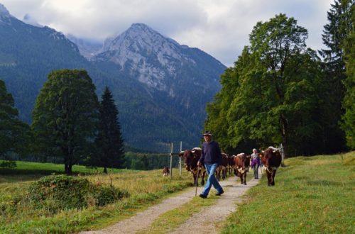 Auf dem König Max Weg in Richtung Taubensee