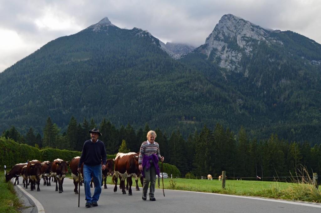 Sepp und Lieserl Wurm mit ihren Kühen auf der Triebenbachstraße