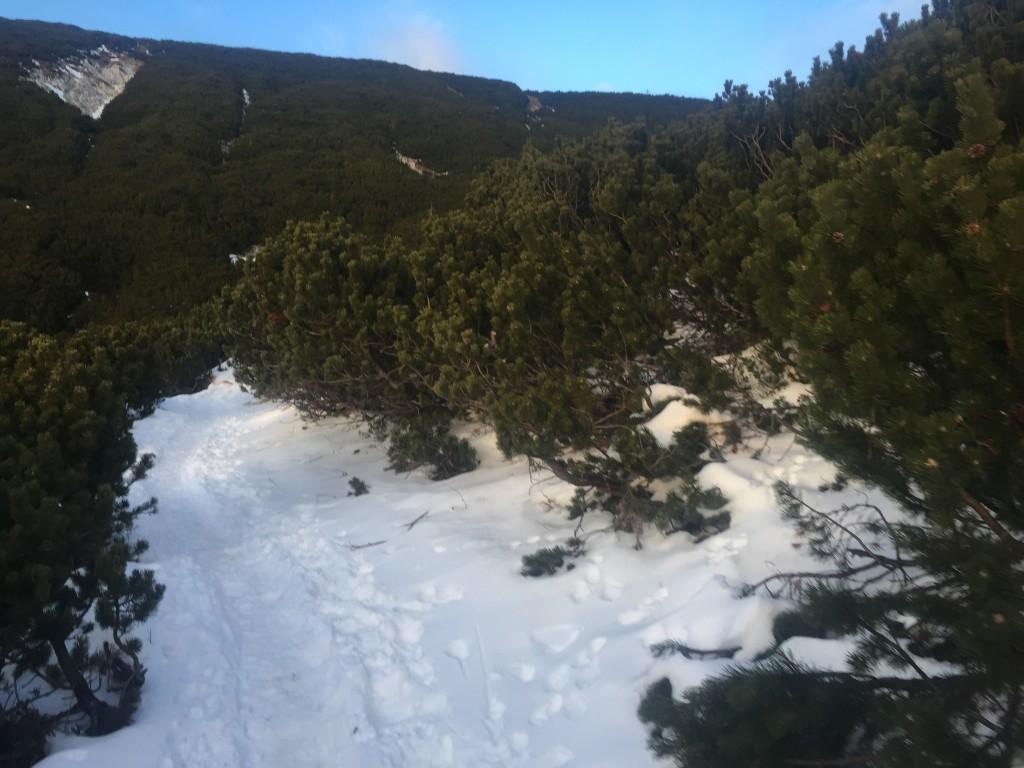 Schnee in Latschen