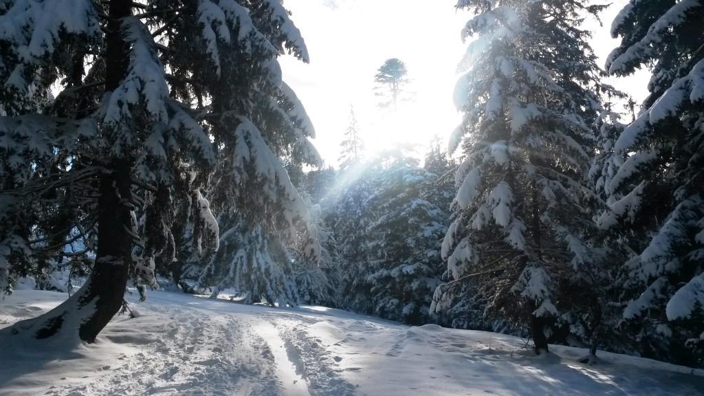 Rossfeld - ausreichend Schnee