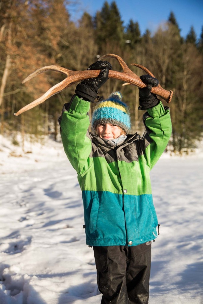 Warum werfen Rothirsche im Winter ihr Geweih ab?