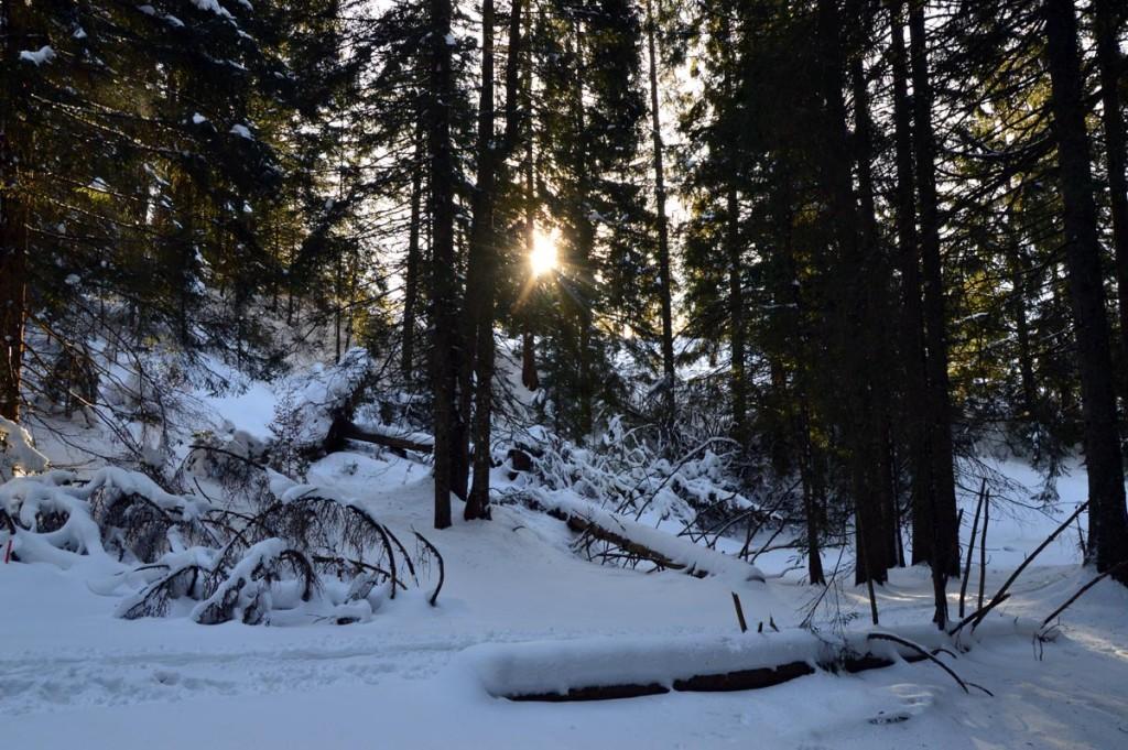 Verschneiter Wald am Hochschwarzeck